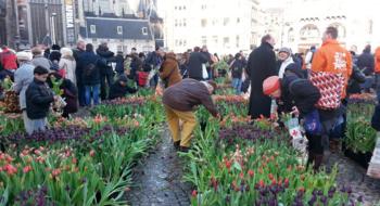 Национальный день тюльпанов в Амстердаме